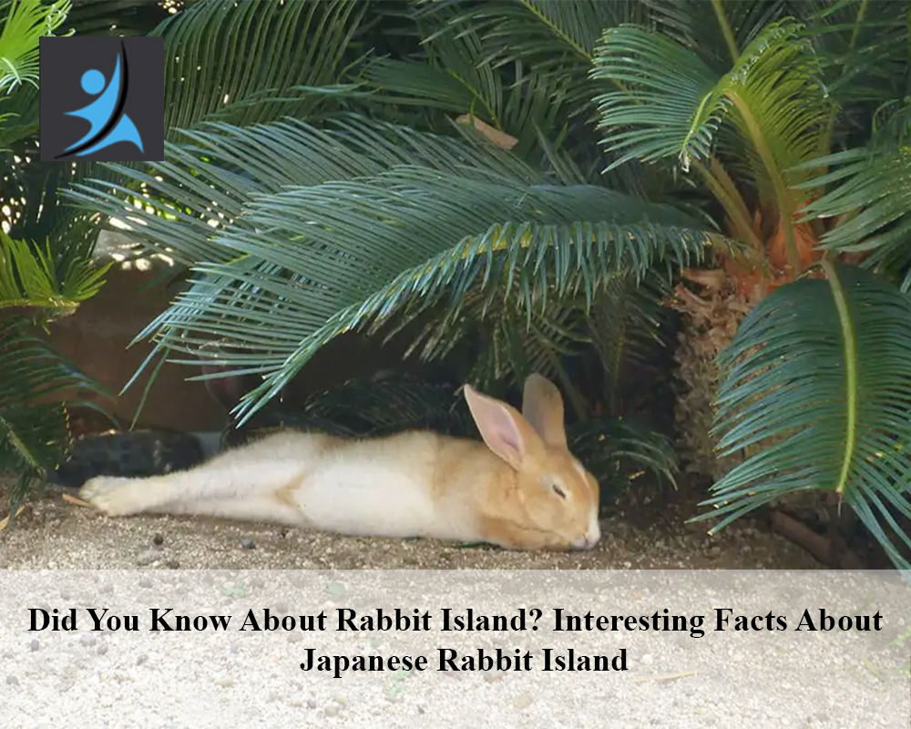 Did You Know About Rabbit Island, Interesting Facts About Japanese Rabbit Island