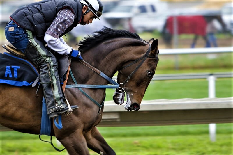 Why Horse Racing is Cruel, a tough question for the player to control the horse at the race track